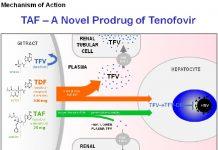 Sơ đồ minh họa quá trình chuyển hóa TDF và Tenofovir alafenamide (TAF) trong cơ thể con người