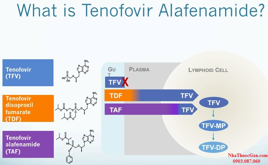 tenofovir alafenamide fumarate là gì