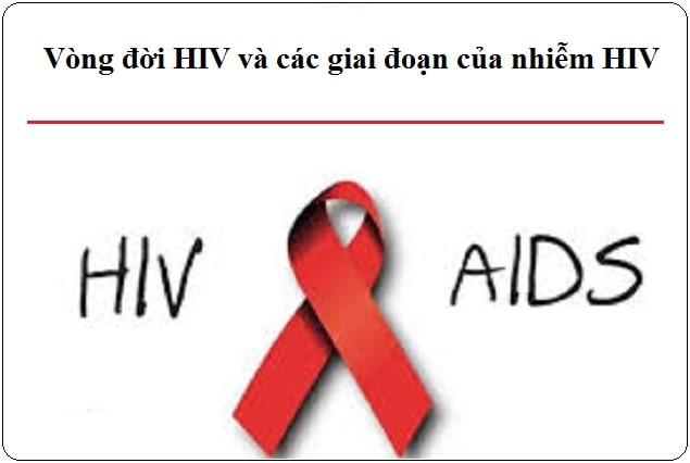 vong doi hiv va cac giai doan nhiem hiv
